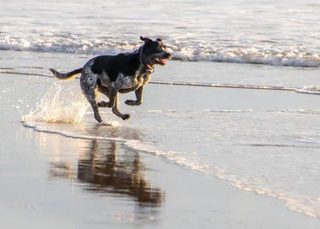 Hundbad på stranden